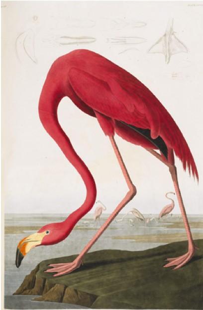 Audredbird