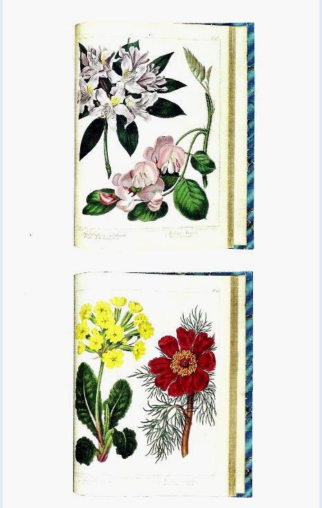 Sydenflower